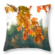 The Last Bit Of Fall Throw Pillow