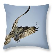 The Magnificent Osprey  Throw Pillow