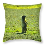 The Marmon Takes A Look Throw Pillow
