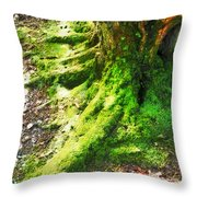 The Moss Covered Roots Throw Pillow