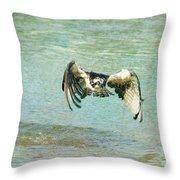 The Osprey Glare Throw Pillow