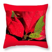 The Poinsettia Throw Pillow