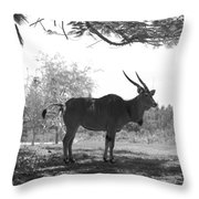 The Post Card In Black And White Throw Pillow