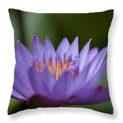 The Pure Experience Throw Pillow