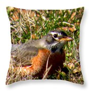 The Robin Stare Throw Pillow