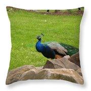 The Rocking Bird Throw Pillow