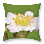 The Simplest Rose Throw Pillow