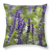The Smell Of Lavender  Throw Pillow