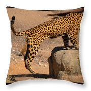 The Spotted Cat Throw Pillow