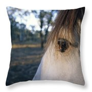 The Staring Eye Of A Clydesdale Horse Throw Pillow