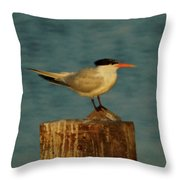 The Tern Throw Pillow by Ernie Echols