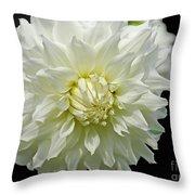 The White Dahlia Throw Pillow