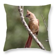 The Youngster Throw Pillow