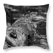 There Is A Frog On The Log Throw Pillow