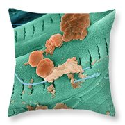 Thermophile Bacteria Throw Pillow