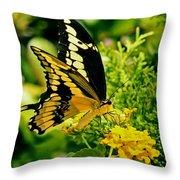 Thoas Swallowtail #1 Throw Pillow