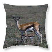 Thomson Gazelle And Newborn Calf Throw Pillow