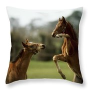 Thoroughbred Foals Playing Throw Pillow
