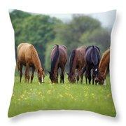 Thoroughbred Horse, Ireland Throw Pillow