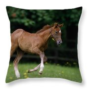 Thoroughbred Horse, National Stud Throw Pillow