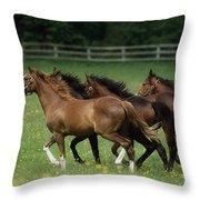 Thoroughbred Horses, Ireland Throw Pillow