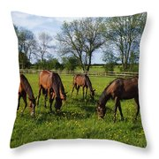 Thoroughbred Horses, Yearlings, Ireland Throw Pillow