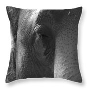 Thoughts Of The Elephant Throw Pillow