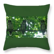 Three Barred Owls Throw Pillow