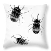 Three Beetles X-ray Throw Pillow