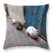 Three Cats In Essaouira Throw Pillow