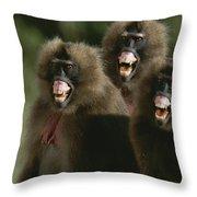 Three Female Geladas, Theropithecus Throw Pillow