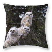 Three Great Horned Owl Bubo Virginianus Throw Pillow