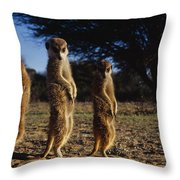 Three Meerkats With Paws Poised Neatly Throw Pillow