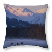 Three Northern American Bald Eagles Throw Pillow