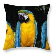 Three Parrots Throw Pillow