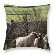 Three Sheep In A Field With Stone Throw Pillow