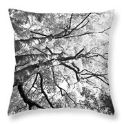 Three Trees Reach For The Sky Black And White Throw Pillow