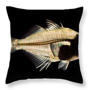 Tibetan Glassfish Throw Pillow
