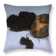 Tick With Eggs Throw Pillow