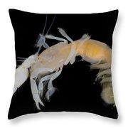 Tidepool Ghost Shrimp Throw Pillow