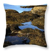 Tidepool In Maine Throw Pillow