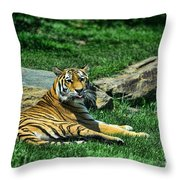 Tiger - Endangered - Lying Down - Tongue Out Throw Pillow