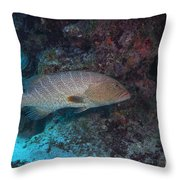 Tiger Grouper Swimming Along The Bottom Throw Pillow