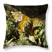 Tiger In The Rough Throw Pillow