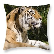 Tiger Observations Throw Pillow