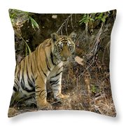 Tiger Panthera Tigris Six Month Old Throw Pillow