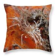 Tiger Shrimp On Orange Sponge, Bali Throw Pillow