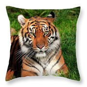 Tiger Sitting In The Grass Throw Pillow