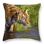 Tiger Standing In Water Throw Pillow