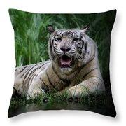 Tiger White Throw Pillow